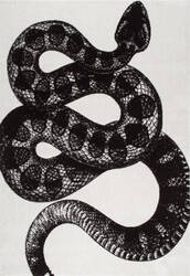 Nuloom Thomas Paul Power Loomed Serpent Black & White Area Rug